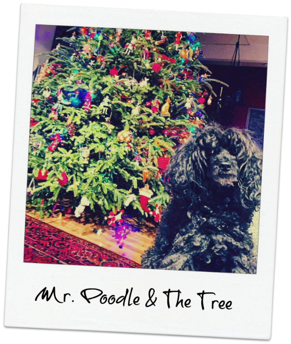 mr poodle and the tree
